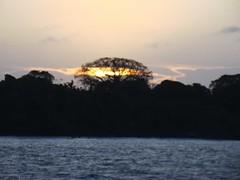 Árvore da luz