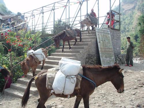 Fateful mules