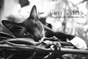 27 Nov Stray (furry-photos) Tags: animal cat mammal feline stray impressedbeauty