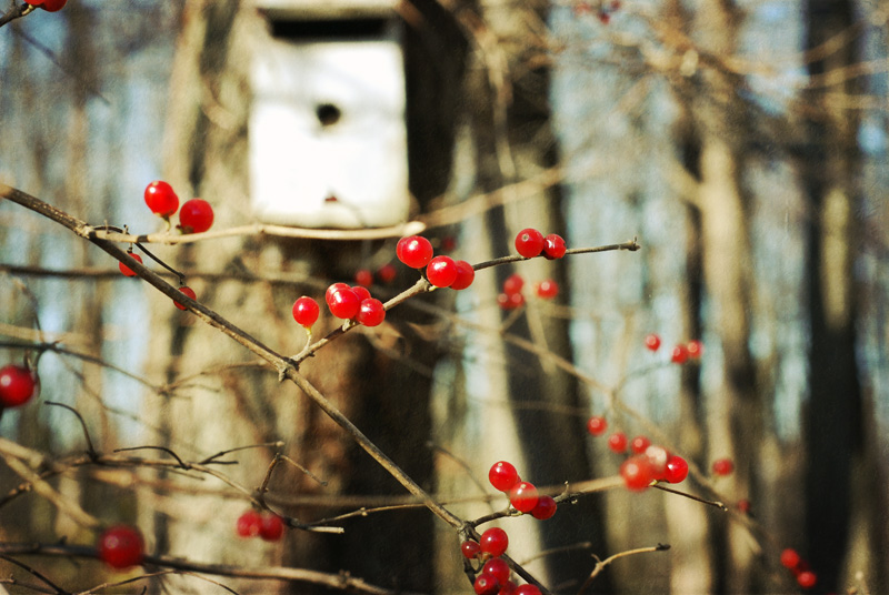 Red berries and birdhouse