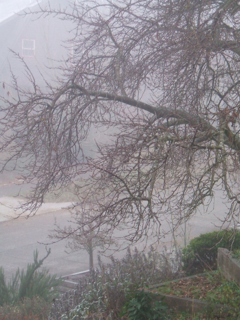 Plum tree in winter fog