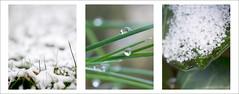 winter (tobias f.) Tags: schnee winter white black blur color colour macro green pentax grn nano blume makro smc weiss manfrotto tropfen weis bej k10d pentaxk10d