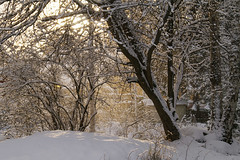 (StudioStrawberri) Tags: winter snow sweden dalar
