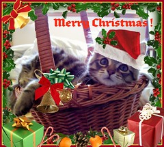 Wishing You All a Very Furry Christmas! (FurBabyLuv *Finally back Online) Tags: monster cat kitten basket card adopted mainecoonmix kittykisses merrrychristmas furrychristmas purrrrrrrrs