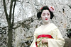 K O T O H A : A Glance (mboogiedown) Tags: woman beauty fashion japan cherry asian japanese spring clothing kyoto asia feminine traditional blossoms makeup maiko geiko geisha sakura kimono gion hairstyle kansai kanzashi kotoha hanakanzashi kobu