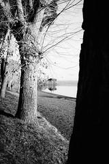 Three trees (lorenzoviolone) Tags: bw blackwhite blackandwhite finepix fujix100s fujifilm fujifilmx100s monochrome polaroid665 vsco vscofilm x100s aligned beach growth lake lakeside mirrorless nature pointofview pov sand streetphoto streetphotobw streetphotography tree trees walk:trevignano=01012017 trevignanoromano lazio italy