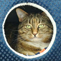 Sparkles - 6 year old spayed female
