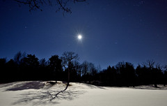 Moonlight Shadow (Kojaniemi) Tags: kimmoojaniemi woods coppice snow winter february oak tree golfcourse stars starry starrysky moon moonlit moonlight