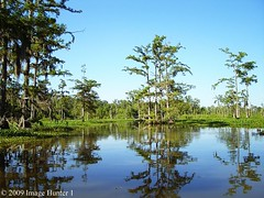 Bayou Courtableau (Image Hunter 1) Tags: nature louisiana scenic bayou swamp cypress bayoucourtableau