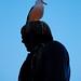George Gull Photo 6
