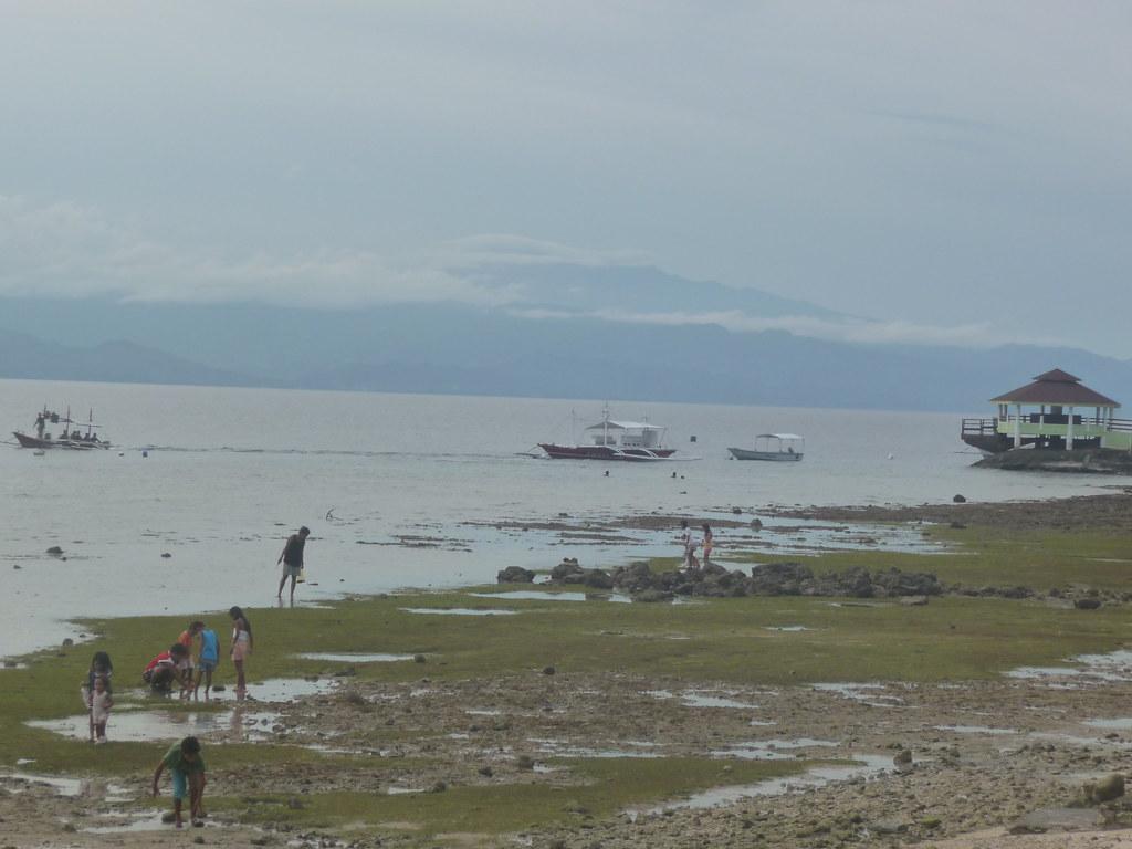 Cebu-Moal Boal (98)