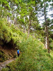On the Trail  (olvwu | ) Tags: blue sky cloud mountain tree green forest nationalpark hiking taiwan trail mtjade chiayi jademountain yushan jungpangwu oliverwu oliverjpwu chiayicounty highestpeak olvwu yushannationalpark mtjademainpeak jungpang 100peaksoftaiwan alishantownship jademountainrange nationalparkandcentralmountainrange highestpeakinnortheastasia mtjadehikingtrail yumountain yushanrange