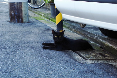 Today's Cat@20090801