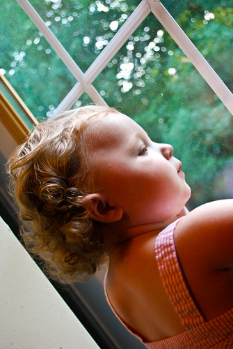 Window Gazer-2