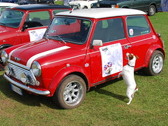 50th Mini Anniversary (can we have this one PLEASE) (JRT ) Tags: blue sky people dog sun hot grass car jack tents nikon jrt russell mud sunny mini terrier belle muddy jackrussellterrier d40 brownhead 19592009 50thminianniversary johnwarwood aboveandbeyondlevel1 flickrjrt