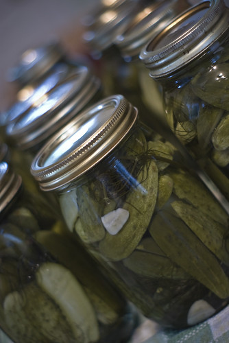 Dill Pickles, year 2