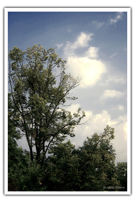 Sky in the park