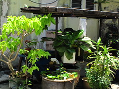 IMG_2347   二奶巷的花园