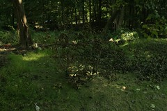 _MG_6396.JPG (zimbablade) Tags: trees sleepyhollow dougmiller videopoem