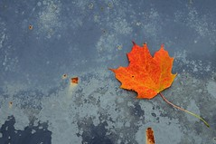 Leaf on a Rusty Hood (ICT_photo) Tags: ontario car leaf maple rust hood junkyard rockwood mcleans