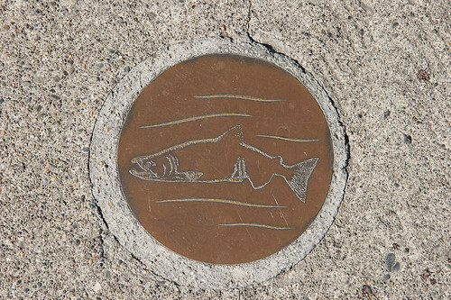 Follow the salmon to the fish ladder