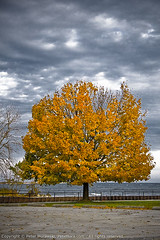 132: Autumn Tree (Peter Morawski) Tags: park autumn lake ontario canada fall colors marie project colours waterfront pentax peter zen da pete 365 mississauga gta limited curtis imagery exposures mora morawski 18250 k100d mariecurtispark 18250mm justpentax zenimagery petemora 365exposuresproject petemorawski