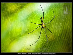 Hello Madam... I am Anirban and I have Arachnophobia (Anirban Brahma) Tags: macro green colors spider big nikon colorful web fear afraid arachnophobia 105mm 8legs nikond200 nikon105mm28macrovr