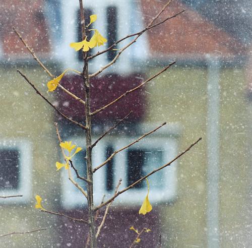 Snow now...