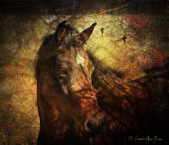 UVM Morgan Horse: In the Shadows (Isabelle Ann) Tags: art cheval photographer graphic isabelle pferde cavalo pferd equine cabello equus paard mostbeautiful morganhorse universityofvermont equineart colorefex beautifulhorse isabelleann isabelleanngreen equestrianart equinephotographer artistichorse uvmmorganhorsefarm isabellegreen plantecheval