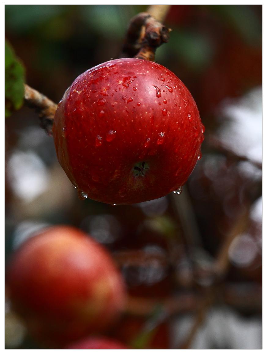 好吃的蜜蘋果