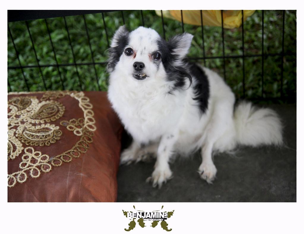dog_adopt8