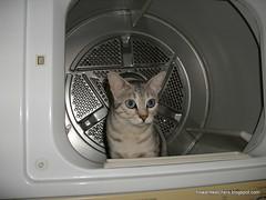 Dryer Inspector