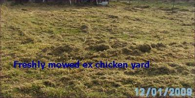 Freshly mown ex chicken yard