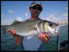 SL 24 (Gorrioni) Tags: fishing shoreline lures spinning rod sammy pescado pesca robalo daiwa paseante lubina llampuga labrax lightspinning luckycraft seuelos zclaw gunfish gunnish