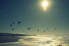 birds (joanna rose) Tags: ocean california thanksgiving sun seagulls beach xpro pacific crossprocess