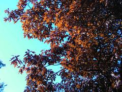 Fall Colors Boulder   DSCN0511