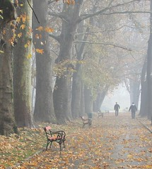 lonely walk (cuckove) Tags: park autumn trees mist tree fall leaves misty fog canon bench walking path foggy macedonia fallen trunks benches walkers  citypark skopje  topseven  skopjecitypark ysplix canon1000d cuckove