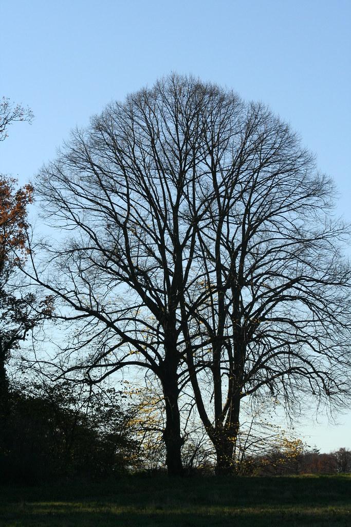 Træer mod novemberhimlen