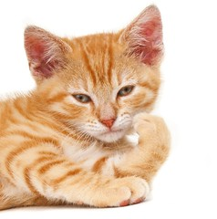 Le Penseur (edwindejongh) Tags: pictures pets animal cat kitten chat rood poes redstripes penseur animalphotography hebbes redkitten catonwhite edwindejongh rodestrepen catvertise sabinevanderhelm ktje dierenmodellen roodkatertje hebbespostcards animalmodellingcappcappdierenfotoscats