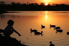 [フリー画像] [人物写真] [子供ポートレイト] [少女/女の子] [シルエット] [夕日/夕焼け/夕暮れ] [鴨/カモ] [湖の風景]    [フリー素材]