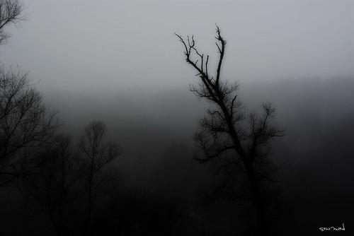 silence. suddenly.