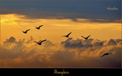 (VeroonsVision) Tags: sunset sky holland birds geese spring may atmosphere schiermonnikoog sfeer 2011 nikond90 veroonsvision