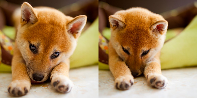 Sora cutest faces, Shiba mind control power