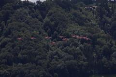 PC - 7 Team der schweizer Luftwaffe mit PC - 7 in alter Farbgebung und und Pilatus PC - 21 über dem Flughafen Bern Belpmoos in der Schweiz (chrchr_75) Tags: show juni schweiz switzerland suisse swiss bern flughafen christoph svizzera berne flugplatz internationale berna suissa 1106 2011 flugshow kanton chrigu kantonbern bärn belpmoos chrchr hurni chrchr75 bernbelp chriguhurni woche24 flugmeeting juni2011 belpmoostage belpmoosfest chriguhurnibluemailch albumzzz201106juni hurni110619