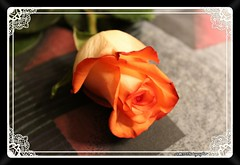 A moment from My Valentine (PhotoJester40) Tags: inside indoors valentines flower rose gift lovely special pretty creative framed colorful amdphotographer elegant