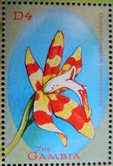 Odontoglossum lindleyanum (Sylvio-Orquídeas) Tags: selos stamps orquídeas orchids orchidaceae especies species flores flowers odontoglossum lindleyanum oncidium lindleyoides