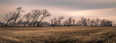 windrow (Christian Collins) Tags: trees windrow michigan winter cornfield stark windblown countryside february row field canoneos5dmarkiv earth stubble stump bare
