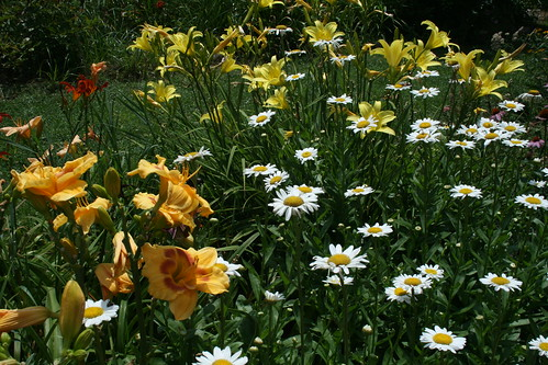 'Jedi Tequila Sunrise,' daisies, and lemon lilies