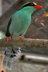 DGJ_4447 - Bye Zoo (archer10 (Dennis) (50M Views)) Tags: city trip travel pe