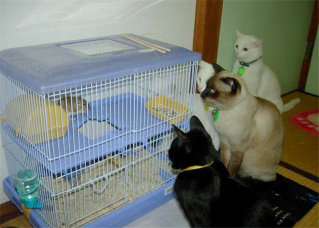 cats&dogs_33